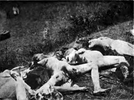 Krivajica, 1914. Femei violate, umilite, batjocurite, ciopârțite, chinuite, masacrate, ucise.